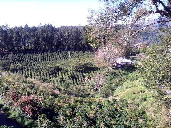 Villa Marita: La vista dai bungalow