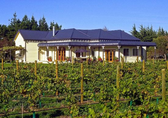 The Old Manse: The vineyard