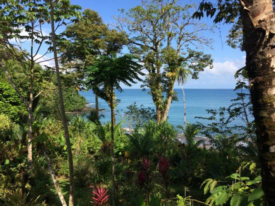 Copa de Arbol Beach and Rainforest Resort: View from Main Lodge/Dining Room