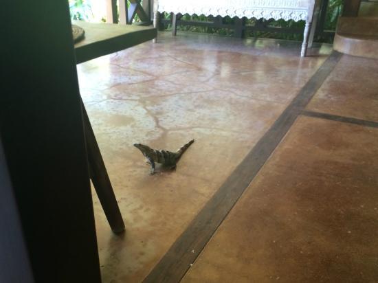 Latitude 10 Beachfront Resort: Do Not Feed the Lizards