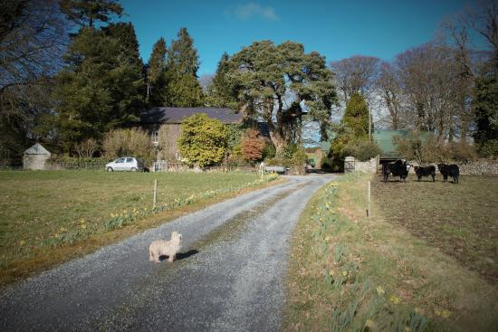 Cullintra House: Our little Oliver in the drive way up to the house