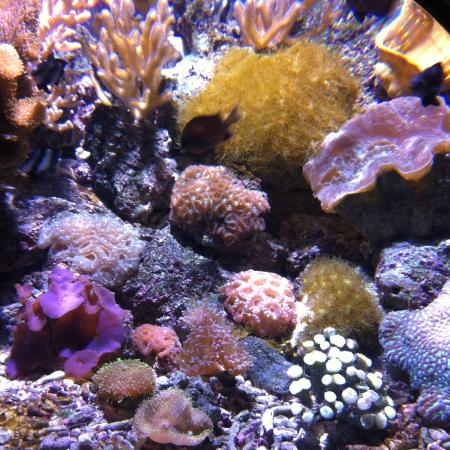 poissons picture of aquarium de biarritz biarritz tripadvisor