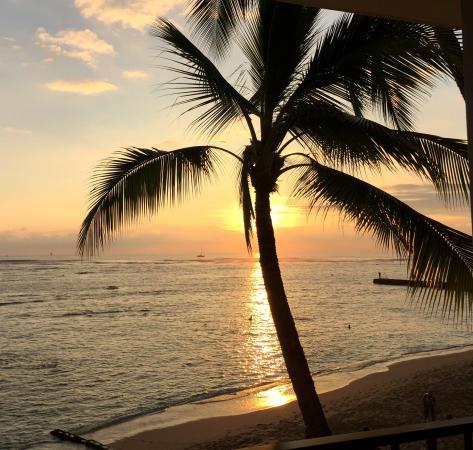 Orchids: Honolulu sunsest