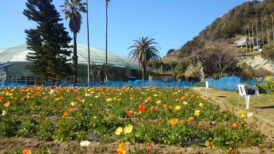 Shirahama Flower Park