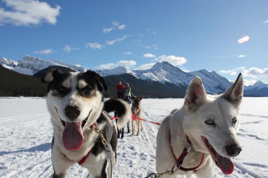 Mad Dogs & Englishmen: Beautiful day