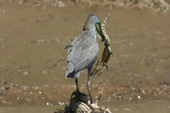 Fantastic Birding
