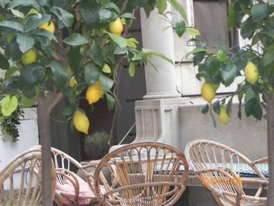 Terrasse Romantique Avec Citronnier Picture Of Casa Gracia