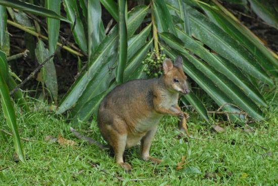 Crater Lakes Rainforest Cottages: Local Wildlife close to the Cottage