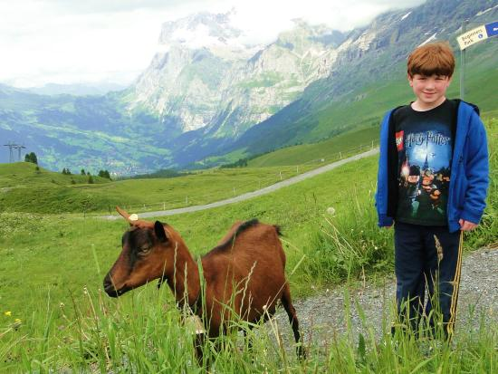 Grindelwald, Suiza: Friendly goats along the hike