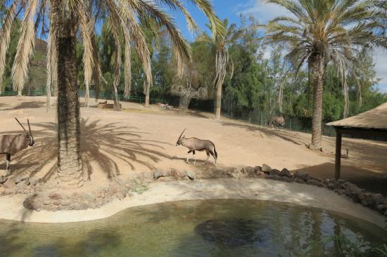 Шоу котиков - Picture of Oasis Park Fuerteventura, Fuerteventura - TripAdvisor