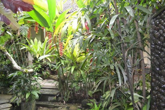 LadyBamboo Villa: Garten