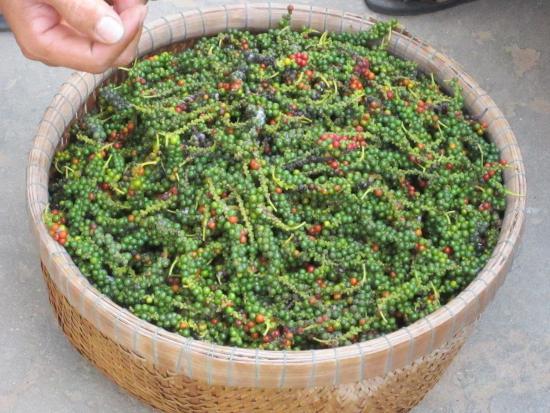 Peppers in Phu Quoc chez Lê Hô