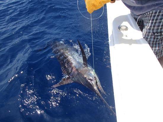 Wayward Wind Grenada Fishing: 2nd blue