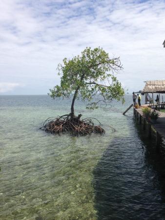 Ciudad Perdida Eco Lodge: Trip to Boca del Toro, Panama with Cahuita Tours