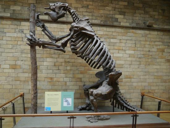 Terra Cotta Natural History Museum