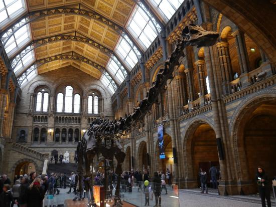 Foyer Museum Uk : Hintze hall natural history museum london picture of