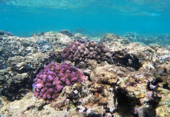Coral Sanctuary: Coral reef