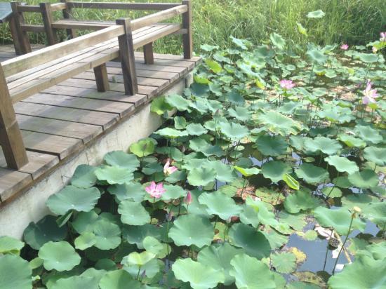 Ningbo Daqiao Ecological Farm: 2