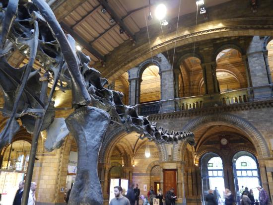 Foyer Museum London : Hintze hall natural history museum london picture of