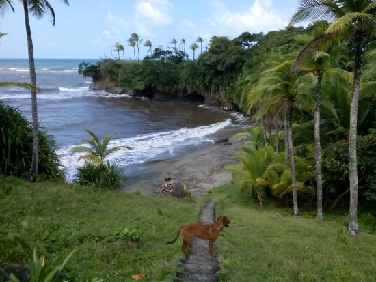 Morgan Bay Hotel: Beach area