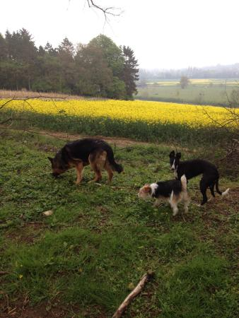 Headington, UK: JD, Stella & Tilly walking the Avenue at Shotover