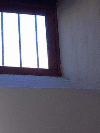 La Bodega Casa Rural: Cobwebs and dirt around windows.