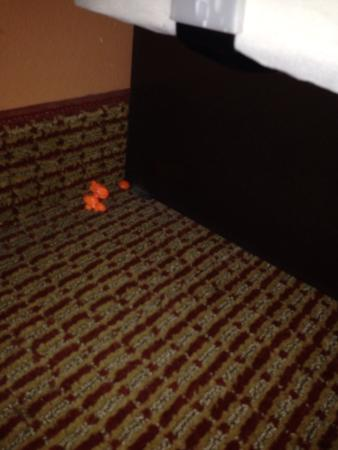 Country Inn & Suites by Radisson, Portage, IN: Previous guests food on floor