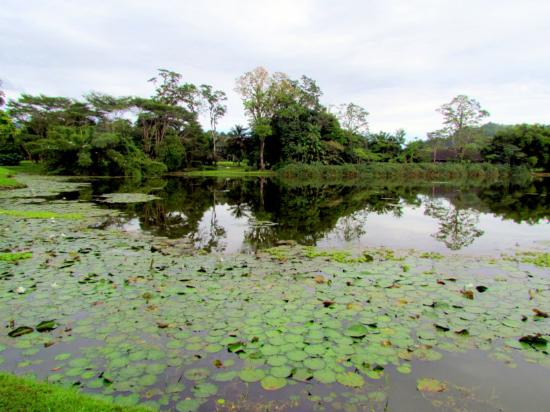 Center for Tropical Agricultural Research and Education (CATIE): Lake
