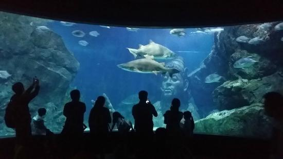 Sharkinaseaoffire diving with the sharks. - Picture of SEA LIFE Bangkok Ocean...