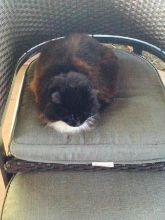 Peace Of Maui: A big kitty