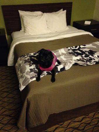Sleep Inn Shady Grove: Mattie's first experience in a hotel!