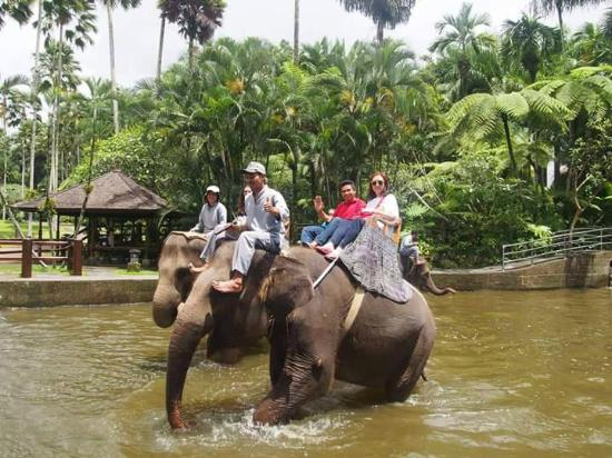 Bali Purma Tour - Private Day Tours