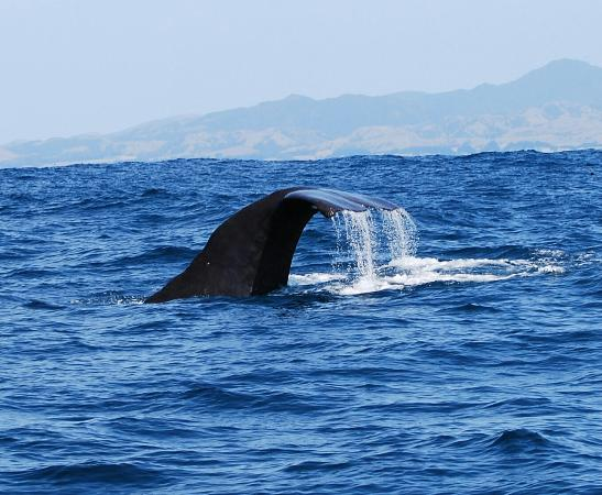 Kaikoura, New Zealand: Amazing shot of sperm whale's tailfin