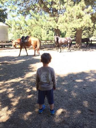 Cabalgatas Tom Wesley : Scrutando i cavalli