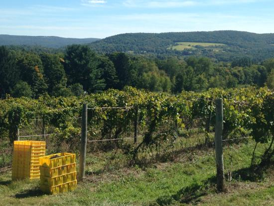 Brookfield, CT: DiGrazia's Vineyard