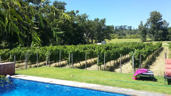 Laibach Vineyards Lodge: pool with vines in backround