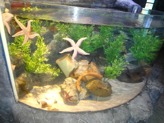 SEA LIFE Oberhausen: Sea stars