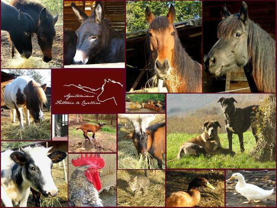 Fattoria Le Caselline: I nostri animaletti