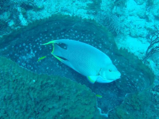 Scuba Works: Fish