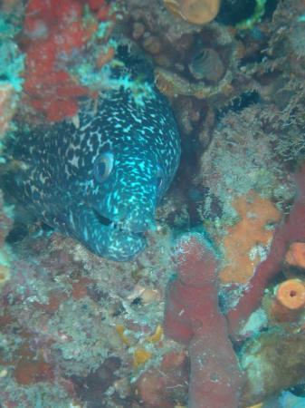 Scuba Works: Another eel