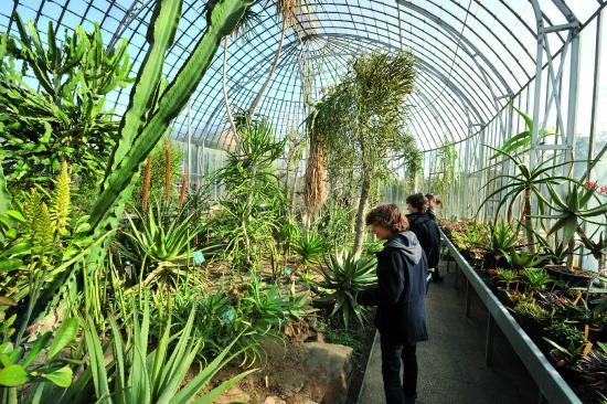 Le Palmarium - Photo de Jardin des Plantes, Nantes - TripAdvisor