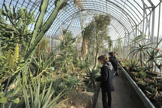 Serres arides - Picture of Jardin des Plantes, Nantes ...