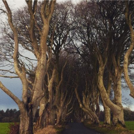 Ballymoney, UK: The Dark Hedges