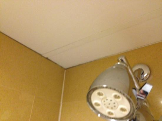 Greenville Marriott: mold around the top of bathroom