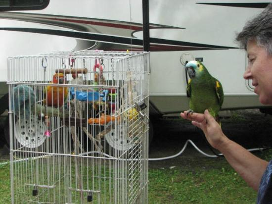 "Flintlock Family Campground: Jack ""The Camping Bird"" has company"