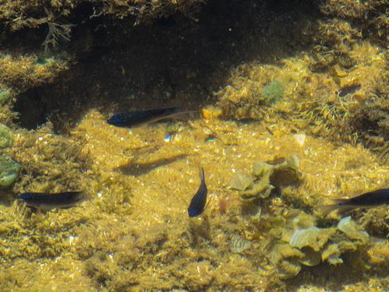 Foto de iberostar bahia praia do forte piletas naturales for Piletas naturales argentina