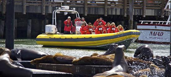 Bay Voyager : Sea Lions at Pier 39