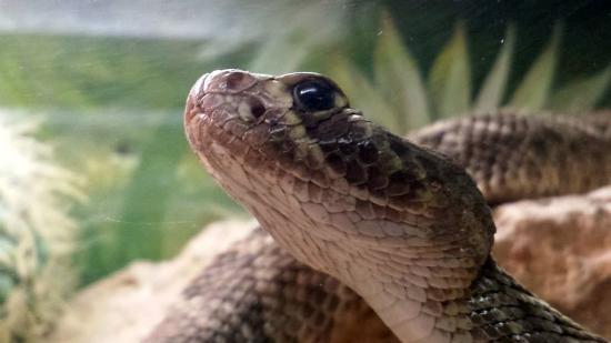 Abilene Zoo: Snake