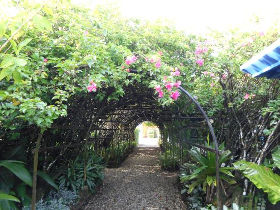 Blue Osa Yoga Retreat and Spa : It's like walking through Eden