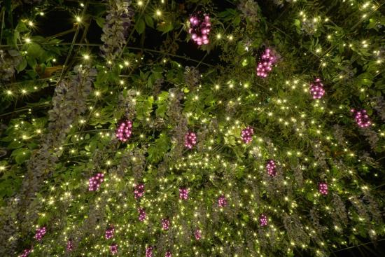 christmas lights at garvan woodland gardens - Garvan Gardens Christmas Lights